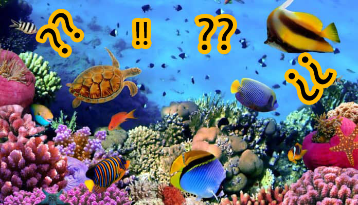 What is the marine organism that represents you?